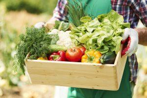 Lee más sobre el artículo Nuevos sabores para el verano